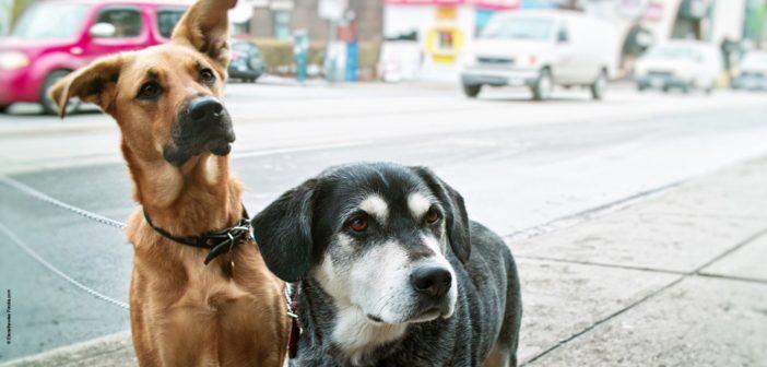 Deux chiens attendent dans une rue.